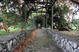 jamaica botanical garden